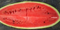 Watermelon (Trinidad & Tobago)